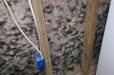 Indoor Air Quality - Mold Testing & Abatement
