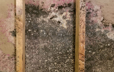 Mold Testing and Abatement